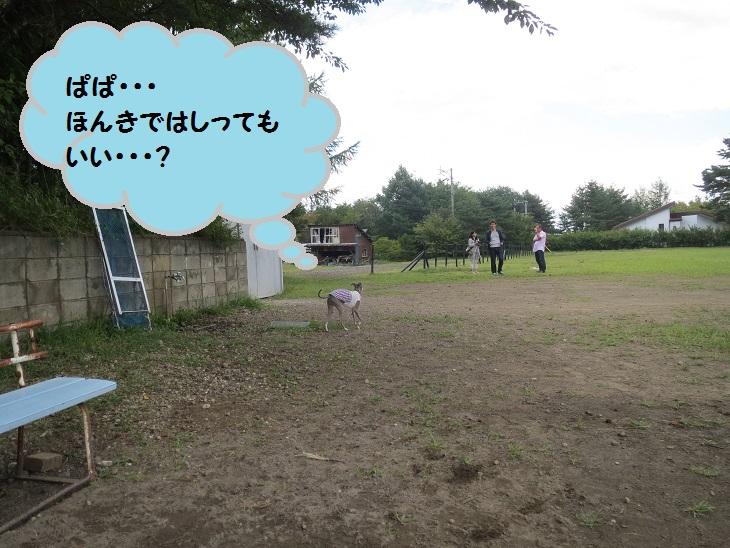 2013_0901_132701img_1934