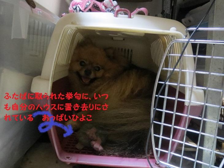 2013_0912_210101img_1948